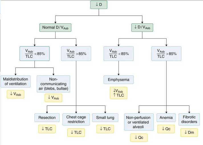 lung diffusion specialty gas