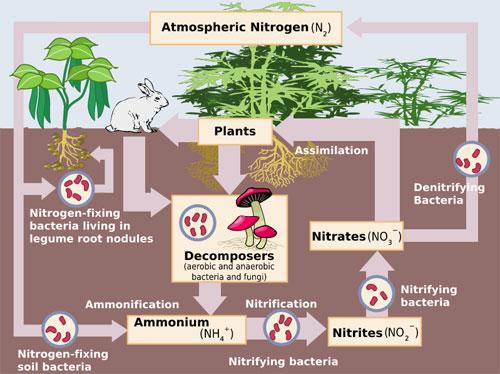 nitrogen_biological_atmosphere_gas mixtures